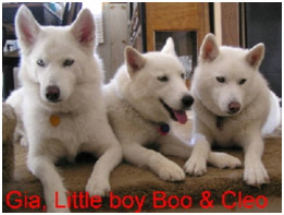Gia, Little Boy Boo, and Cleo