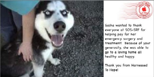 Sasha sends her thanks